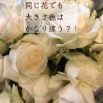 花の事情:同じ品種の花色、大きさが違う?!